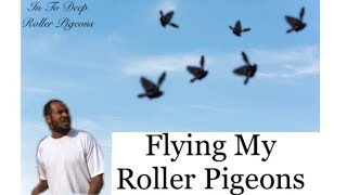 Flying My Roller Pigeon | In To Deep Roller Pigeons