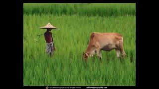 Kopa Shamsu full video song..mp4