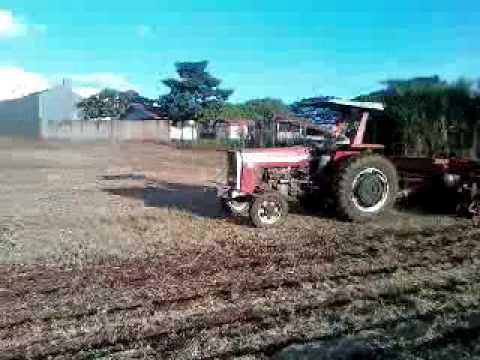 colhendo e plantando