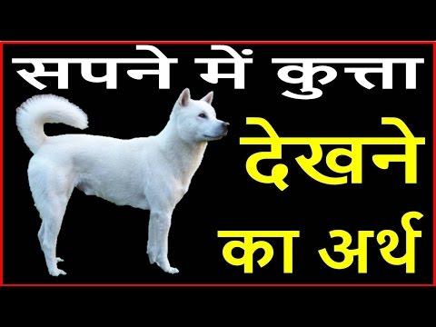 Xxx Mp4 सपने में कुत्ता दिखाई दे तो समझें भाग्यशाली हैं आप Dog Dream Meaning 3gp Sex
