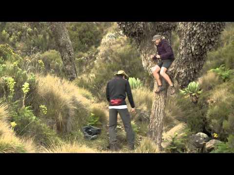 TeleZüri stürmt de Gipfel -- Mister Schweiz besteigt den Kilimandscharo