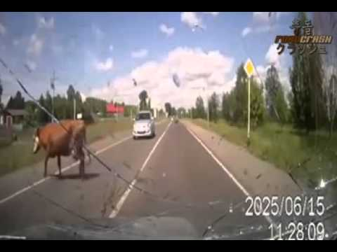 Facking animals on road tr
