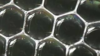 Bubble Packing Dynamics