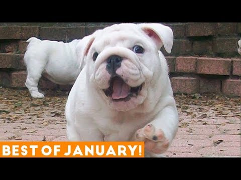 Xxx Mp4 Funniest Pet Reactions Bloopers Of January 2018 Funny Pet Videos 3gp Sex
