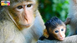 Welcome! New born New birth in CERBZILA Group Young TARA give birth baby name CHRIS Monkey Daily 629
