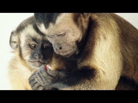 Moral behavior in animals   Frans de Waal