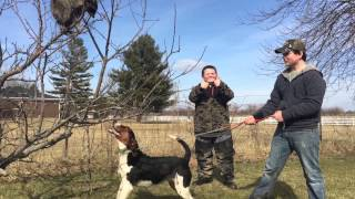 How to train any coon dog to tree a coon !!!
