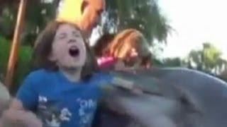 Dolphin Bites Child: Orlando Seaworld Dolphin Caught on Tape | Good Morning America | ABC News