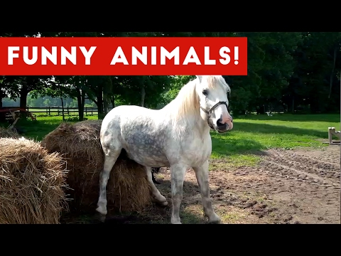 Funniest Pet Clips Bloopers & Moments Caught On Tape 2017 Funny Pet Videos