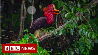 Leuser: From poacher to animal protector - BBC News