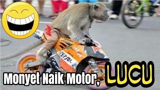 Monyet naik motor motoran lucu