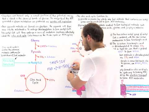 Introduction to Citric Acid Cycle