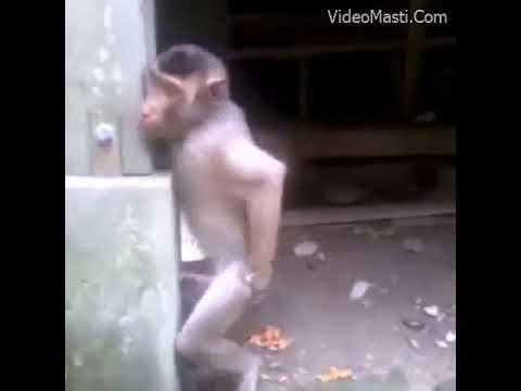 Xxx Mp4 Sexy Monkey 3gp Sex