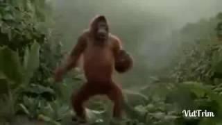 O macaco mais da sarino do mundo