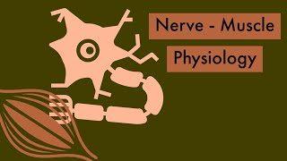 Nerve muscle physiology | Physiology Review - 200 MCQ , 2016