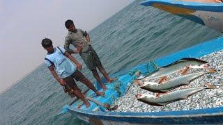 Net Fishing - Fisherman Catches Fish - KADAL TV