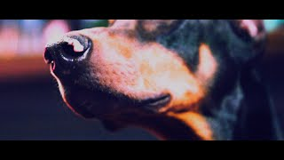 [Alexandros] - Dog 3 (MV)