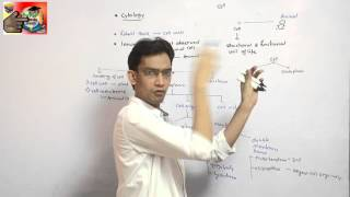 cell structure & function for                AIPMT,WBJEE,AIIMS       etc