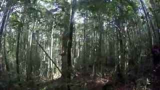 Maliau Basin (Borneo Jungle Adventure) in 4k