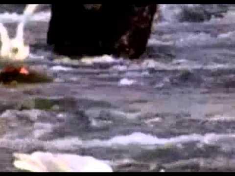 gaivotas são perigosas