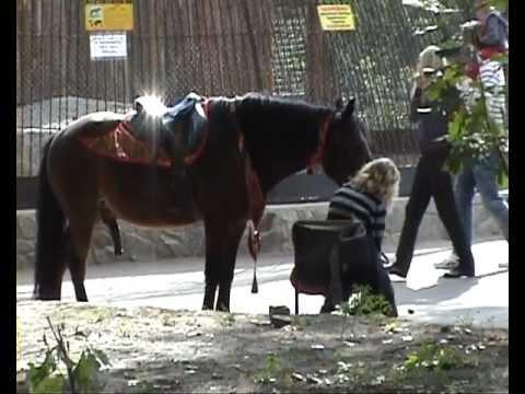 Xxx Mp4 Девушки и лошади Girls And Horses ХЗ 3gp Sex