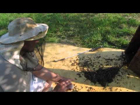рыбалка на пчел