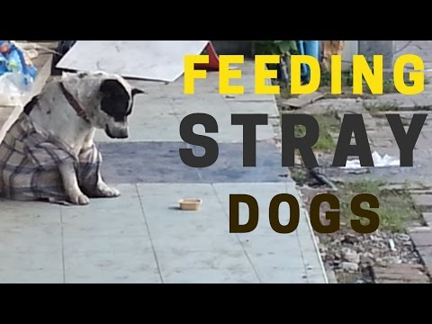 Xxx Mp4 Tourists Feeding Stray Dogs In Thailand Human Kindness Video 3gp Sex