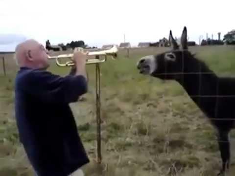 Xxx Mp4 Funny Donkey Duet With Sax Guy 3gp Sex