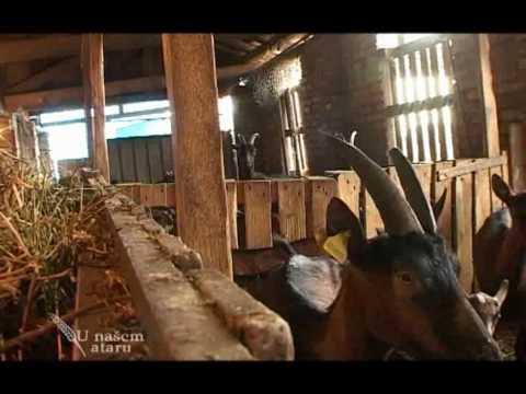 Osavremenjavanje farme koza u Kisacu U nasem ataru 329