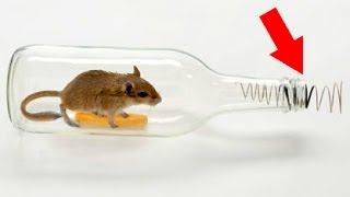 How to make a mouse trap with a plastic bottle 😱 Tutorial