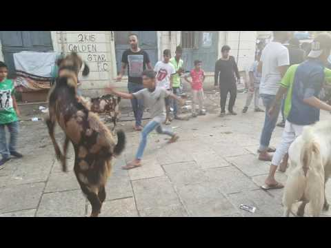Worli Goat 2016 .BDD CHAWL 16/17.MUM:18
