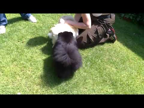 Animal sex videos part -(5)