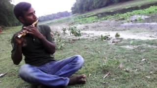 হরিশংকরপুর কাজলের বাসির সুর
