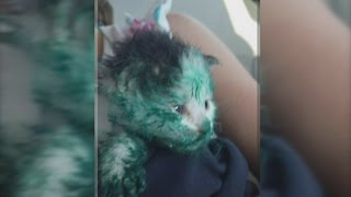 Man saves paint-covered kitten abandoned in dumpster