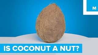 Is a coconut a nut?