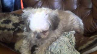 How my dogs react to You Tube Barking sounds...