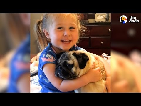Xxx Mp4 Little Girl Says The Funniest Things To Her Pugs The Dodo 3gp Sex