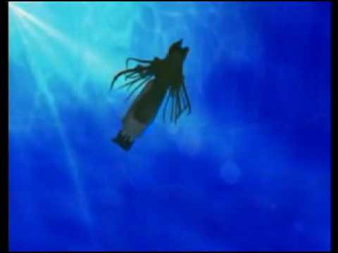 Final Fantasys AMV - Puddle of Mudd - Blurry