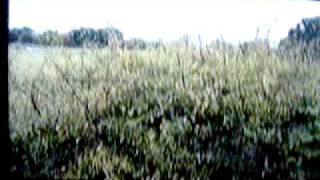 vidéo animo en danger de xxx.mpg