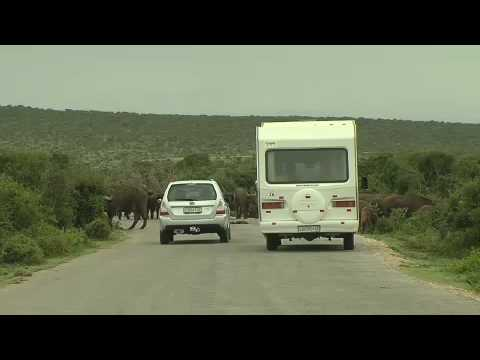 Addo Elephant National Park in the Eastern Cape South Africa