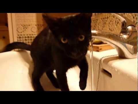 Xxx Mp4 Bipi The Cat Loves Water 3gp Sex