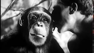 Tarzan's Revenge (1938) JUNGLE ADVENTURE