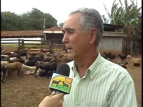 Consórcio da ovinocultura com outras atividades. Renata Saturnino.