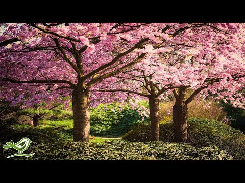 Xxx Mp4 Beautiful Relaxing Music Japanese Music Chinese Music Romantic Music Meditation Music ★106 3gp Sex