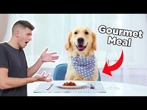I Cooked My Dog A Gourmet 3 Course Meal