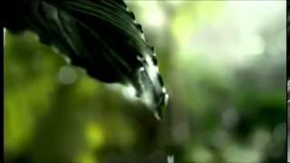Mango Slice Ad Campaign   TVC With Katrina Kaif
