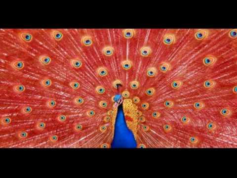 ✖✖✖ Top 10 Aves Mas hermosas del mundo ✖✖✖