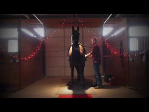 Best Marriage Proposal Ever For a Horse Lover!