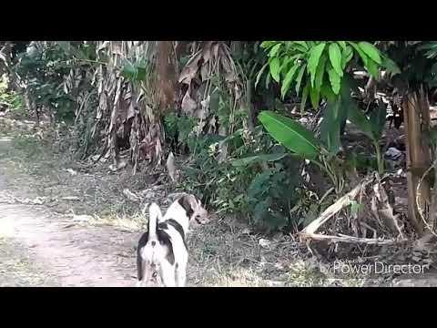 Dog sex new video 2018