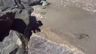 horseshoe bay - cockapoo dog walk - bonchurch - isle of wight
